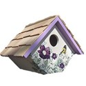 birdhouse wren painted