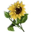 sunflower-ss_mikkilivanos