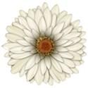 FM-Flowery Summer Element (4)