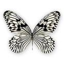 AYW-WildAtHeart-Butterfly