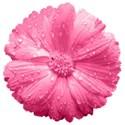 ss_preciouspetals_flower2