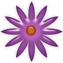 jThompson_summerfun_flower2
