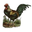 AYW-FarmhouseKitchen-Rooster