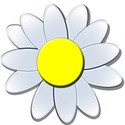 bluefloweryellowdaisy