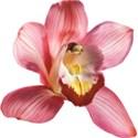snackpackgu_Inspire_flower1a