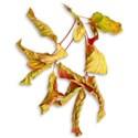 AYW-RRR-LeavesSh