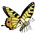 yellow butterfly standing