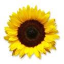WS_Flower_03