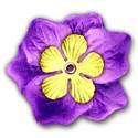SChua_Vibrant_flower1