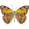 OneofaKindDS_BJandRoses_Butterfly 01