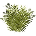 lisaminor_prehistoric_ferns