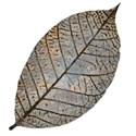 brown blue leaf