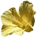Hibiscus bb