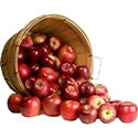 new bushel of apples 2