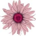 A flower 3