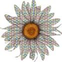 B flower 1