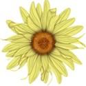 B flower 3