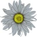 C flower 2