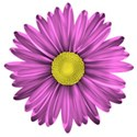 flower 1 b