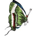 childrensbooks_butterfly