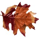 stierney_bountiful_leaf1
