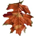 stierney_bountiful_leaf2
