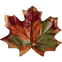 stierney_bountiful_leaf4