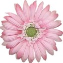 jennyL_dreams_flower1