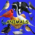Cover Page ANIMALS