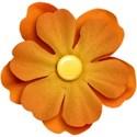SCD_Allaire_flower7