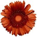 SCD_KeepingMemories_flower6