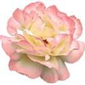 pamperedprincess__tresjolie_rose3 copy