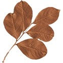 cwJOY-AutumnArt-leaf1