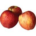 cwJOY-AutumnLove-apples