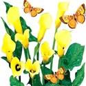 butterflyflowers