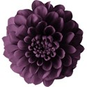 aw_loverocks_dahlia purple