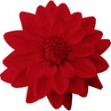 aw_loverocks_dahlia red