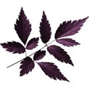 aw_loverocks_leaves purple