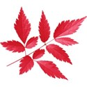 aw_bandit_leaves red