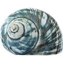 cwJOY-BytheSea-shell6