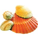 cwJOY-BytheSea-shell8