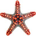 cwJOY-BytheSea-starfish3