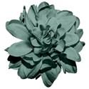 SCD_LAA_flower6