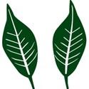 leaf_0008_圖層-10