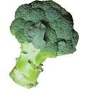 JAM-GrillinOut2-broccoli1
