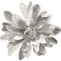 SCD_ComputeThis_flower3