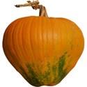 JAM-FallFestival-pumpkin4
