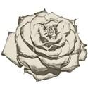 rose_cutout