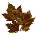 hojas marrones